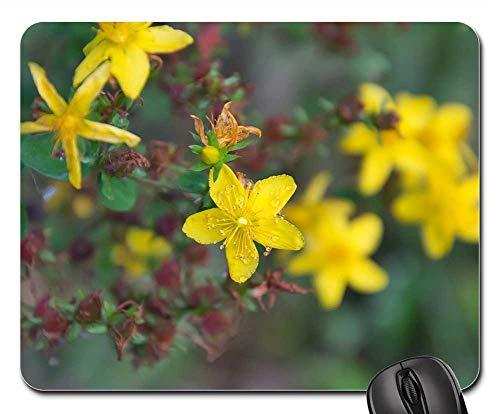 Mouse Pad - Plant Hypericum Tutsan Yellow Flowers Petals