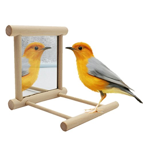 Bird Stand Perch with Mirror for Parrot Budgie Parakeet Cockatiels Conure Finch Lovebird African Grey Macaw Amazon Cockatoo Cage Wood ()