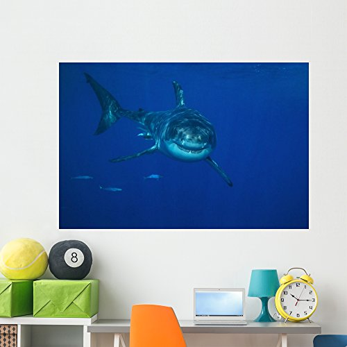 Wallmonkeys NGO-29250-60 WM55904 A White Shark Swims in Clear Water Off Guadalupe Island Peel and Stick Wall Decals (60 in W x 40 in H), Jumbo