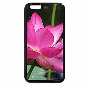 iPhone 6S / iPhone 6 Case (Black) pink lotus