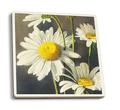 Lantern Press Ox-Eyed Daisy Flowers (Set of 4 Ceramic Coasters - Cork-Backed, Absorbent)