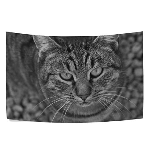 (RH Studio Tapestry Wall Hanging Cat Tabby Eyes Black and White Dorm Livingroom Bedroom Bedspread Sofa Cove Living Kids Girls Boys Room Dorm Deco (60x40inch))