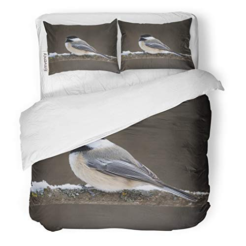 Semtomn Decor Duvet Cover Set Twin Size Red American Black Capped Chickadee in Winter Animal Atricapilla Avian 3 Piece Brushed Microfiber Fabric Print Bedding Set Cover ()
