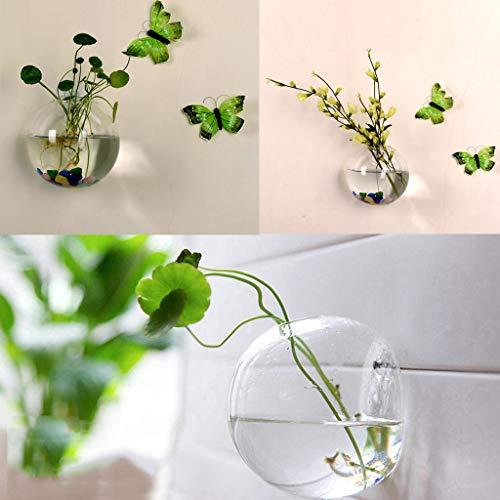 Maikouhai Glass Planters Wall Hanging Planters Round Air Plant Flower Pots Wall Plant Container for Weddings, Parties, - Oval Glass Flower Huge
