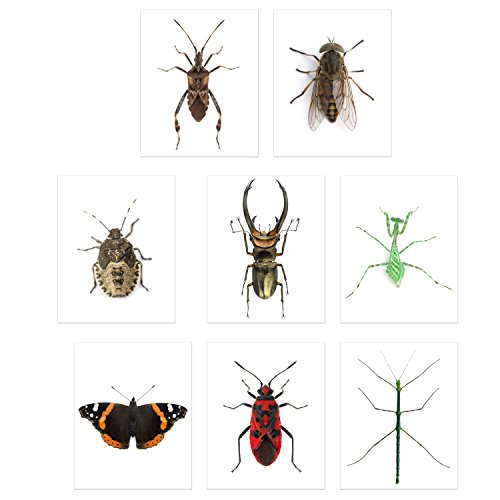 (Faux Bug Collection Prints - Set of 8 (8x10) Cruelty-Free Photographs of Insects Wall Art Decor - Stick Bug - Cyclommatus Elaphus (Beetle) - Giant Horse Fly - Red Admiral Butterfly - Pinstripe Mantis)