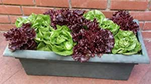 Lettuce Emerald-Ruby Duo 5,000 seeds