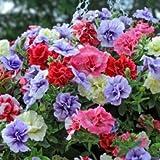 Tumbelina Hanging Mix 150 Petunia Seeds Upc 643451296051