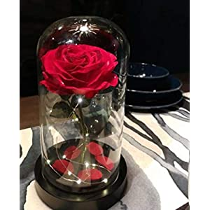 Homeseasons Enchanted Rose,Beauty and The Beast Red Rose Pre-Lit Silk Rose in Glass Dome (Metal Base) 2