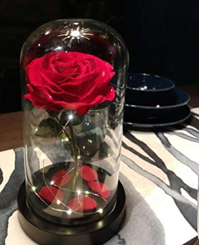 Homeseasons-Enchanted-RoseBeauty-and-The-Beast-Red-Rose-Pre-Lit-Silk-Rose-in-Glass-Dome-Metal-Base