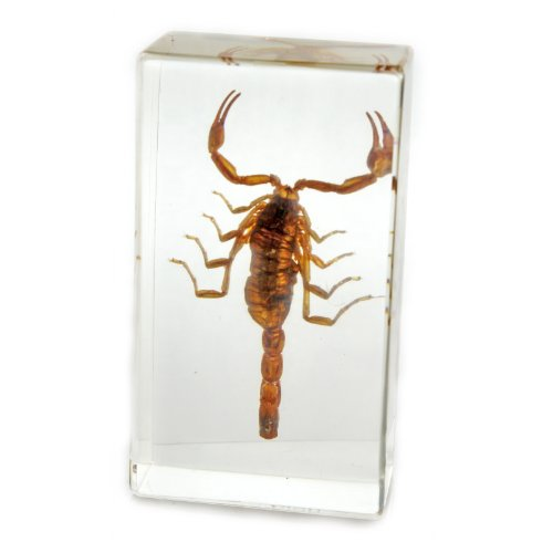 Acrylic Shape Paperweight (REALBUG Golden Scorpion Paperweight (1 5/8 x 2 7/8 x 1))