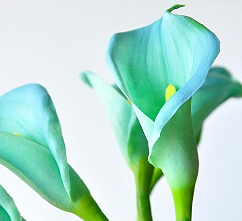 10 pcs Calla Lily Seed Potted Balcony Plant Calla Can Radiation Absorption turquoise Colors (Radiation Cans compare prices)