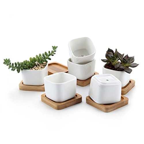 hite Mini Square succulent Plant Pot/Cactus Plant Pot with FREE Bamboo Tray Package 1 Pack of 6 ()