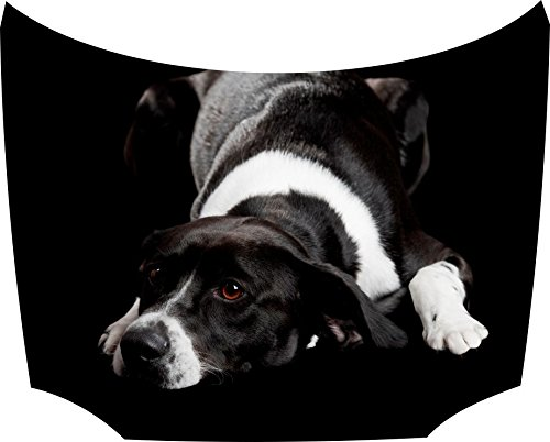 Bonnet Sticker Dog Black: