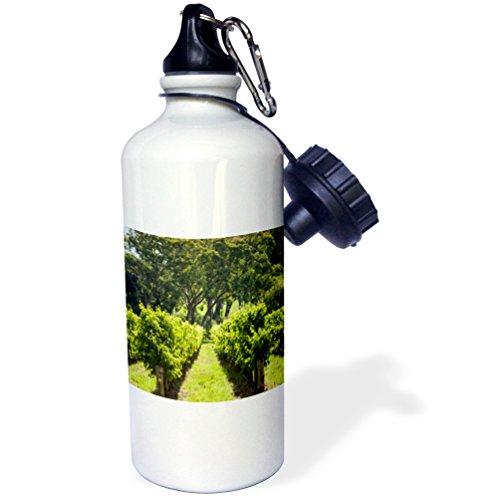 danita-delimont-australia-australia-adelaide-hills-gumeracha-vineyard-21-oz-sports-water-bottle-wb-2