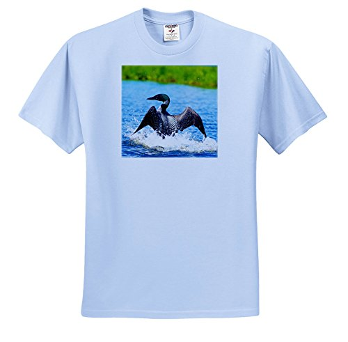 3dRose Danita Delimont - Birds - Common Loon Dancing On Water In a Display To Distract From Its Nest. - T-Shirts - Light Blue Infant Lap-Shoulder Tee (6M) (TS_257465_74) (Loon Water)