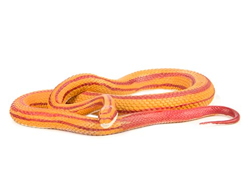 Pet Snakes - Safari Ltd. Incredible Creatures - Corn Snake XL - Phthalate, Lead and BPA Free - for Ages 3+
