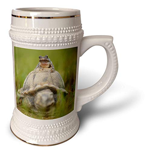 3dRose Stamp City - amphibian - A macro photograph of a Copes gray tree frog on a turtle garden statue - 22oz Stein Mug (stn_315552_1)