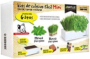 Huerto Urbano - Seed Box Mini Gatos - Batlle: Amazon.es: Jardín