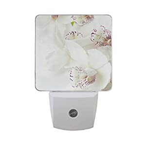 Printing Orchids Flower Patterns on Plug-in LED Night Light Warm White Nightlight for Bedroom Bathroom Hallway Stairways(0.5W 2-Pack) 95