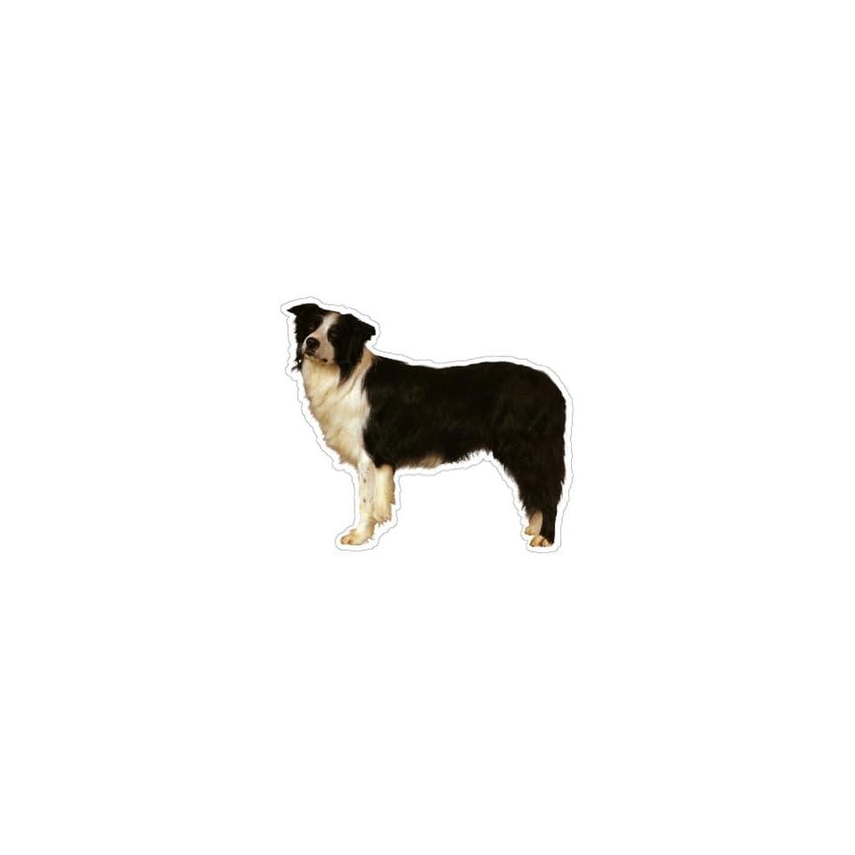 BORDER COLLIE   Dog Decal   sticker car window lover