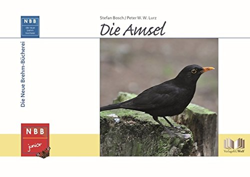 Die Amsel (NBB junior)