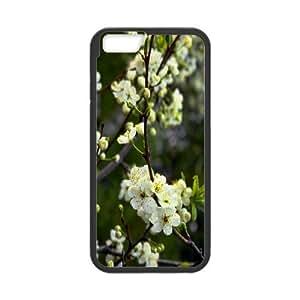 White Cherry Spring Flowers IPhone 6 Plus Cases, Vety {Black}