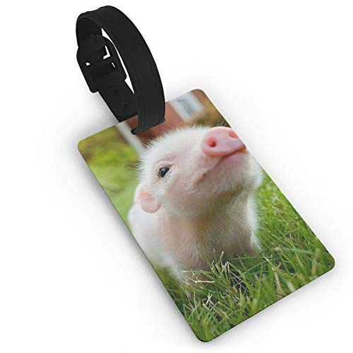HAWAK Cute Baby Pig Piglet Closeup in Grass Luggage Tags Travel ID Bag Tag for Suitcase,Printed Luggage Tags,Flexible PVC Travel ID Identification for Bags