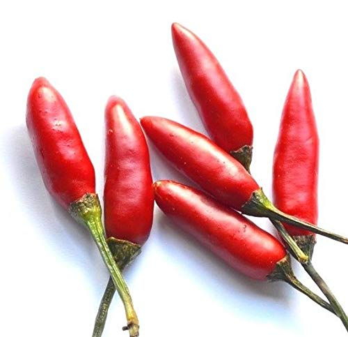 Thai Hot Pepper Seeds You Choose Packet Size Heirloom Asian #77 by 6SHTN (Image #1)
