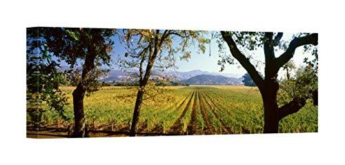 Easy Art Prints Panoramic Images's 'Vines in a Vineyard, Far Niente Winery, Napa Valley, California, USA' Premium Canvas Art 30 x 10 (Far Niente Napa Valley)