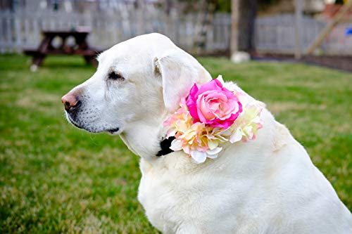 Pave Wedding Designs Dog Wedding Sash Ribbon Collar Made with Pink Silk Rose and Hydrangeas Accent on a Black Ribbon