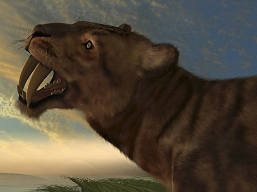 (Posterazzi The Saber-Tooth Cat also called Smilodon with dagger like front canine teeth Poster Print (32 x 24))