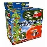 Gardeners' Choice Giant Tomato Tree