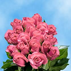 50 Fresh Cut Pink Roses for Valentine's Day | Kiko Roses | Fresh Flowers Express Delivery | The Perfect Valentine's Day Gift