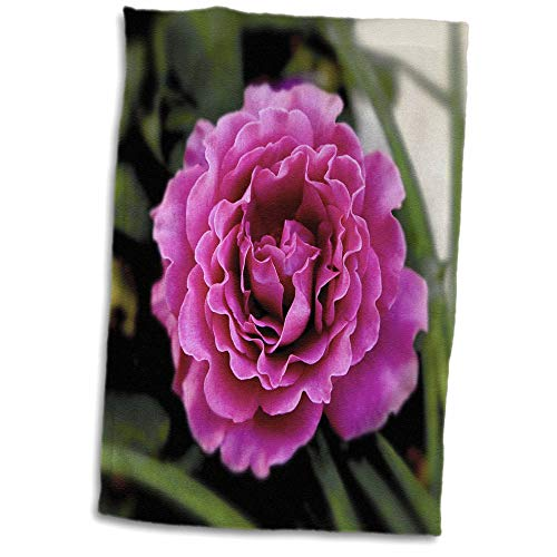 (3dRose Stamp City - Flowers - Photograph of a Lavendar Angel Face Rose Growing in Our Flower Garden. - 15x22 Hand Towel)