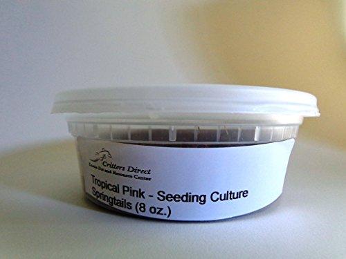 live-springtails-tropical-pink-seeding-culture