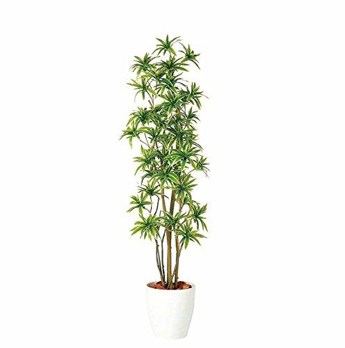 フェイクグリーン 大型 ソングオブインディア FST (ドラセナ 幸福の木) 180cm 白鉢 SC/CT触媒加工済[tk-98900] B072MGNVW2