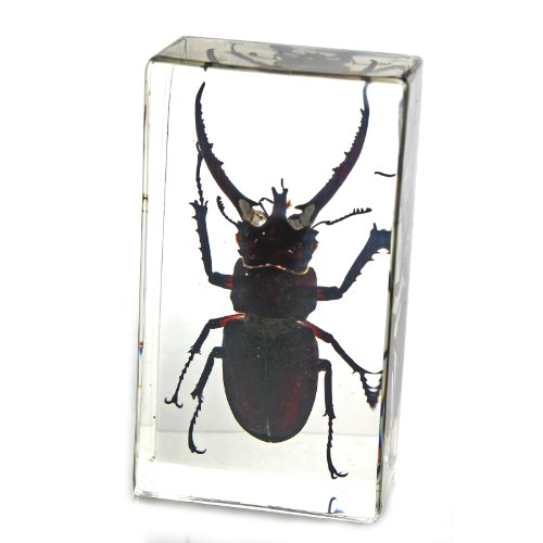 Stag Beetle Paperweight (2.9x1.6x1