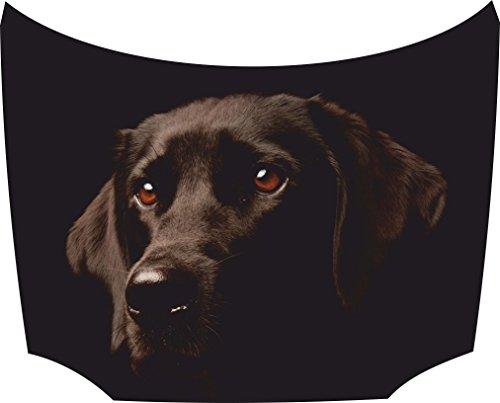Bonnet Sticker Labrador 1: