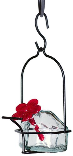 Feeder Hanging Hummingbird Blossom (Parasol LP1CL1 3 by 6-Inch Lunch Pail 1 Hummingbird Feeder, Clear)