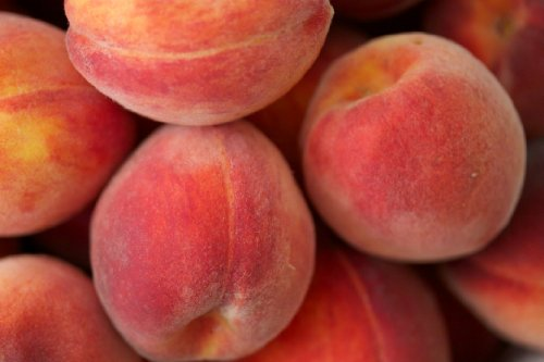 belle-of-georgia-peach-tree-healthy-trees-1-each-plus-bonus