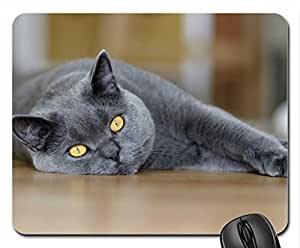 Beautiful Lazy Cat Cute Cool Decorative Design Animal Cat Mousepad Rainbow Designs