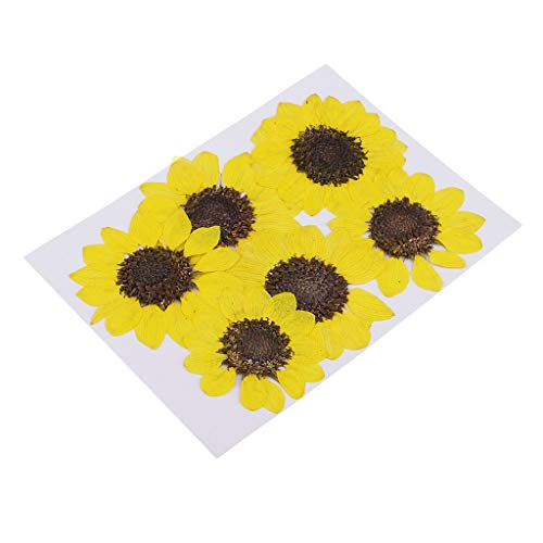 Homyl 6 Pieces Pressed Dried Real Flower Sunflower Scrapbooking Embellishments for Jewelry Making DIY Pendant Charms Ornament Craft 4-6cm - Lemon Yellow