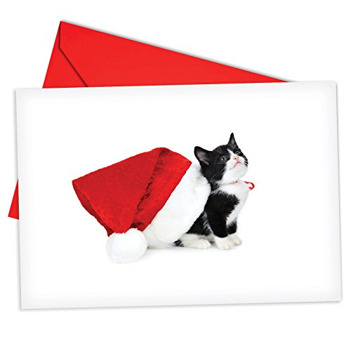 12 'Santa Cats Black' Boxed Christmas Cards w/ Envelopes 4.63 x 6.75 inch, Cute Black and White Kitty Wearing Santa Hat, Festive Feline Holiday Notes, Adorable Kitty Cat Christmas Cards B6687FXSG