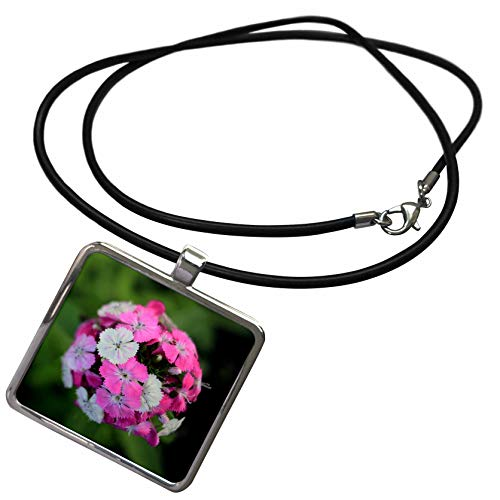 3dRose Stamp City - Flowers - Close up Photo of Dianthus barbatus - Sweet William in Shades of Pink. - Necklace with Rectangle Pendant (ncl_308721_1) ()