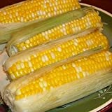 CORN ON THE COB IN THE HUSK FRESH PRODUCE VEGETABLES FROM FLORIDA 6 EARS PER ORDER