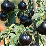 SD0499-0029 Rare Black Friar Tomato Vegetable Seeds, New Live High Yielding Vegetable Seeds, 60-Days Money Back Guarantee (21 Seeds)