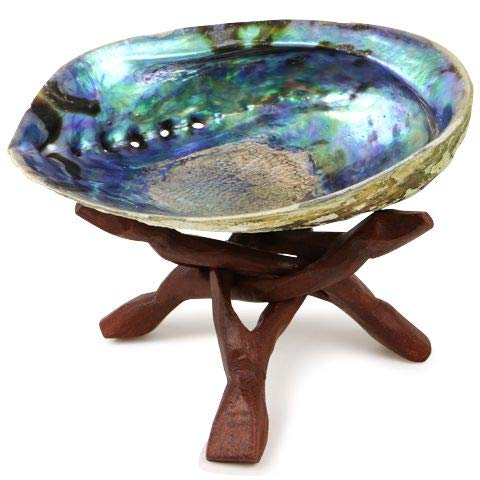 Ocean Shell Studios 6.5''+ Supreme Plus Natural Abalone (Pāua) Shell with Wooden Stand, for Smudging, Cleansing Home, Meditation, Shell Crafts,Incense Holder, Home Décor, 100% Natural, Sustainable. by Ocean Shell Studios.