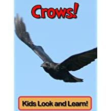 Crows! Learn About Crows and Enjoy Colorful Pictures - Look and Learn! (50+ Photos of Crows)