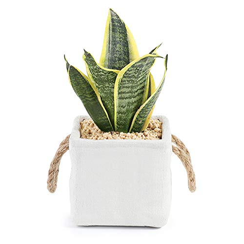Greenaholics Succulent Pots - 4.3 Inch Square Cement Planter with Hemp Rope, Storage Jar, Home Decoration, White