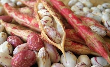 David's Garden Seeds Bean Dry Pinto EB139AC (Brown) 100 Heirloom Seeds